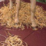 Pavimento Caucho Equino & Reforzado 01